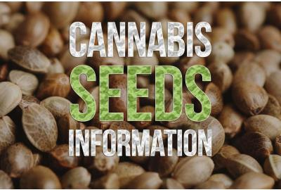 Basics 101: Cannabis Seeds Information
