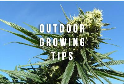 Outdoor Grow Tips