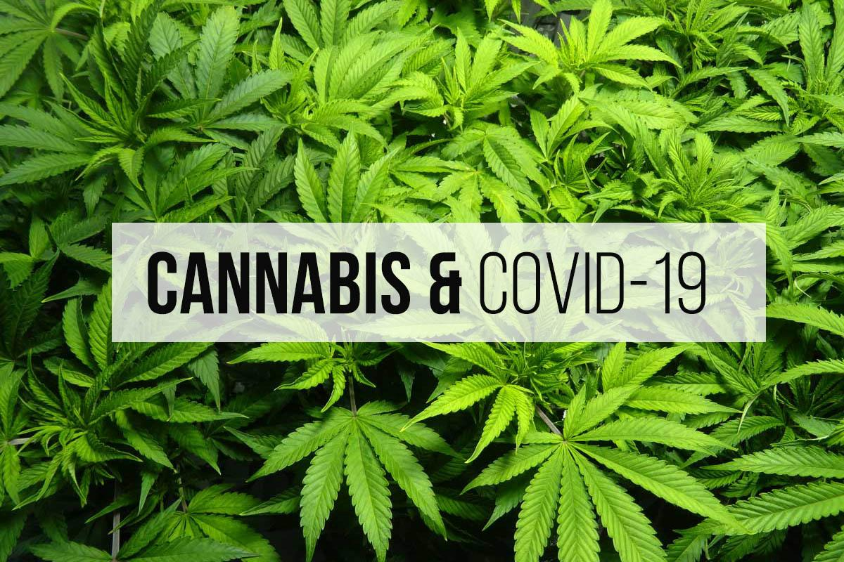 Weed and COVID-19