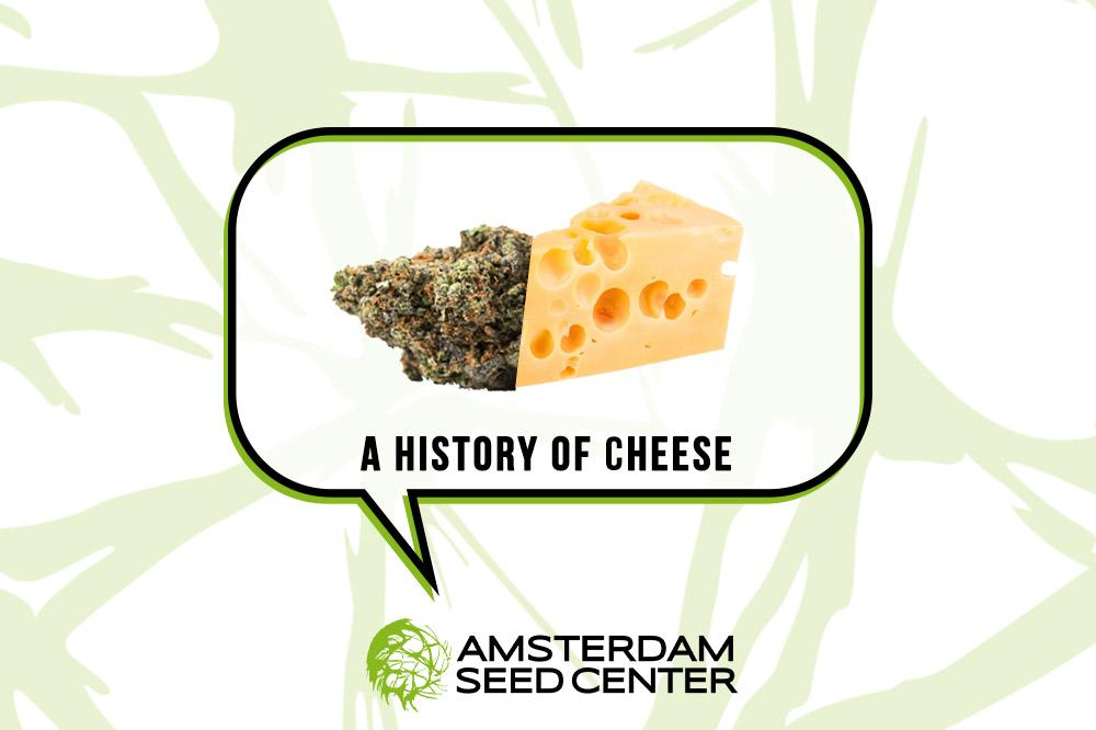 A Short History of The Cheese Strain, and our Top 5 Cheese Picks