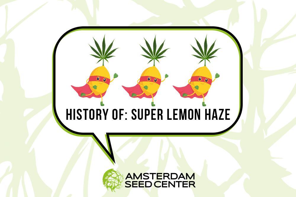 A Short History of Super Lemon Haze and our top 5 Lemon strains