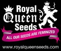 Royal Queen Seeds @ Amsterdam Seed Center