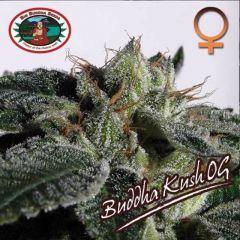Buddha Kush OG - 5PACK