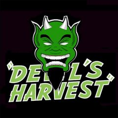 Hell's Bells 10 pack regular