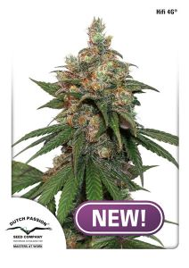 hifi-4g-dutch-passion-amsterdam-seed-center