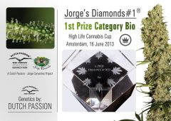 Jorge's Diamonds