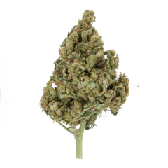 lemon-shining-silver-haze-5pack-feminised-royal-queen-seeds-amsterdam-seed-center-2
