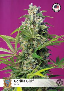 gorilla-girl-sweet-seeds-amsterdam-seed-center