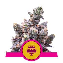 wedding-gelato-royal-queen-seeds-amsterdam-seed