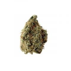 white-choco-auto-5pack-amsterdam-genetics